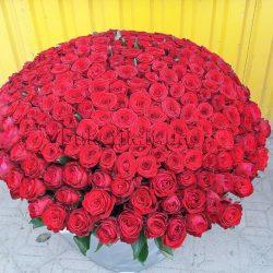 Фото товару 301 троянда