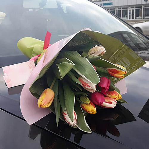 фото 11 тюльпанів мікс
