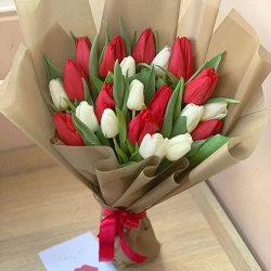 21 червоно-білий тюльпан фото